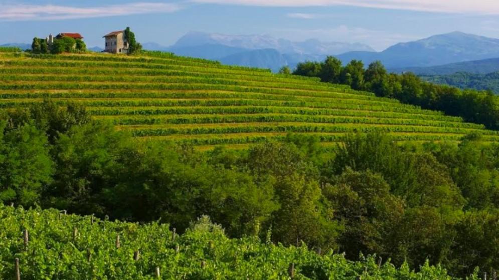Friuli Colli Orientali e Ramandolo: il 2018 annata di vini da ricordare