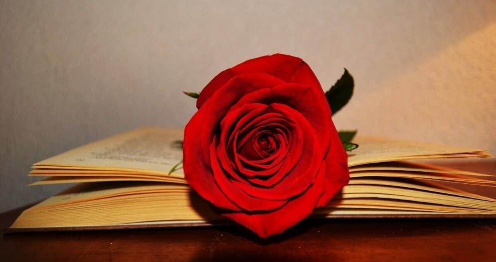Una rosa rossa per San Valentino