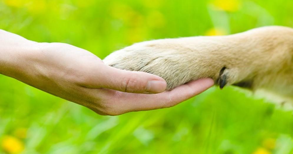 Curino, un cagnolino finisce nel laghetto e muore di ipotermia