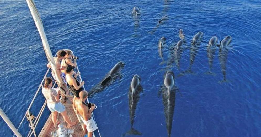 In Liguria arriva il corso per avvistatore di cetacei