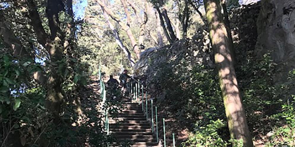 Riapre giovedì 4 aprile il sentiero sopra il 'Viale dei Lecci'