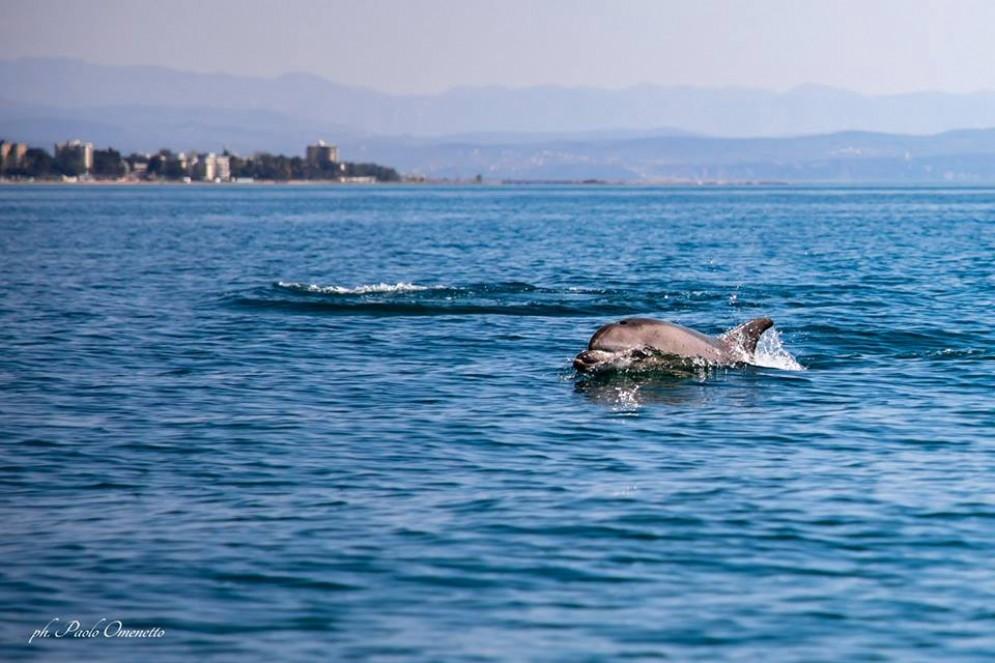 Delfini avvistati a Grado: gli scatti mozzafiato
