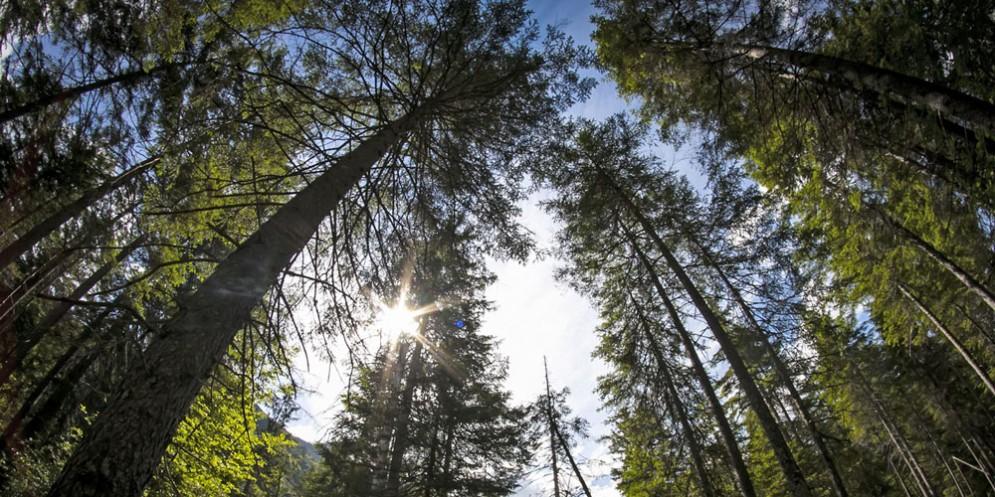 Risonanze: il bosco diventa una sala da concerto e ospita il Coro del Fvg