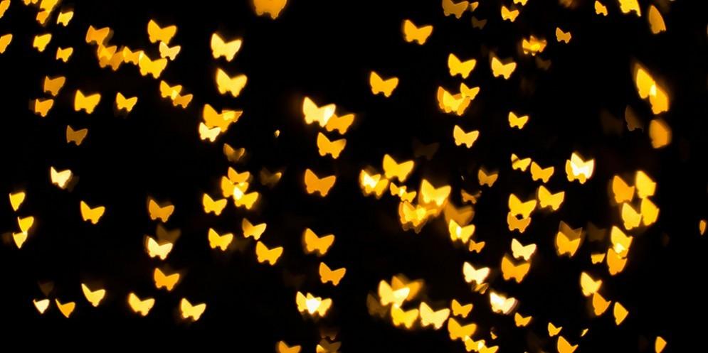 A Bordano torna la magia della «Notte delle farfalle»