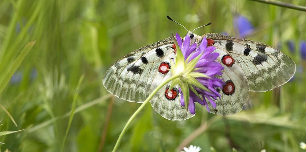 'Gufo che ti passa' e 'Butterfly Safari': due escursioni immersi nella natura