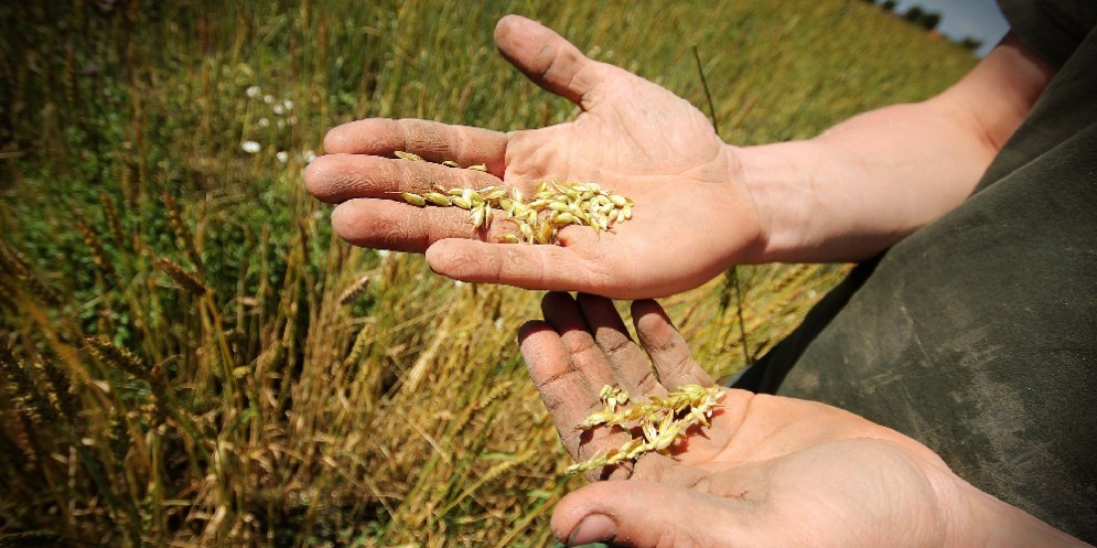 Identikit dell'agricoltore 4.0