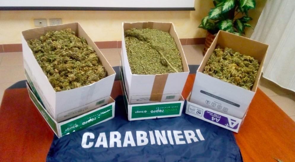 Operazione anti droga in Carnia: sequestrati 2 kg di marjiuana