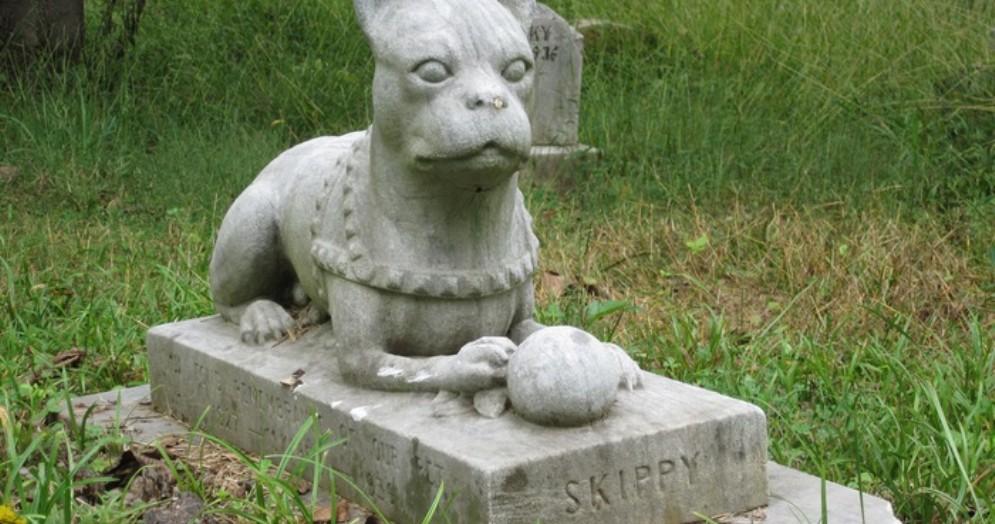 Ok alla bozza di regolamento per l'istituzione e la gestione dei cimiteri per animali