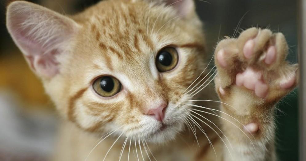 Chiude gatto ex fidanzata in trolley pieno di letame