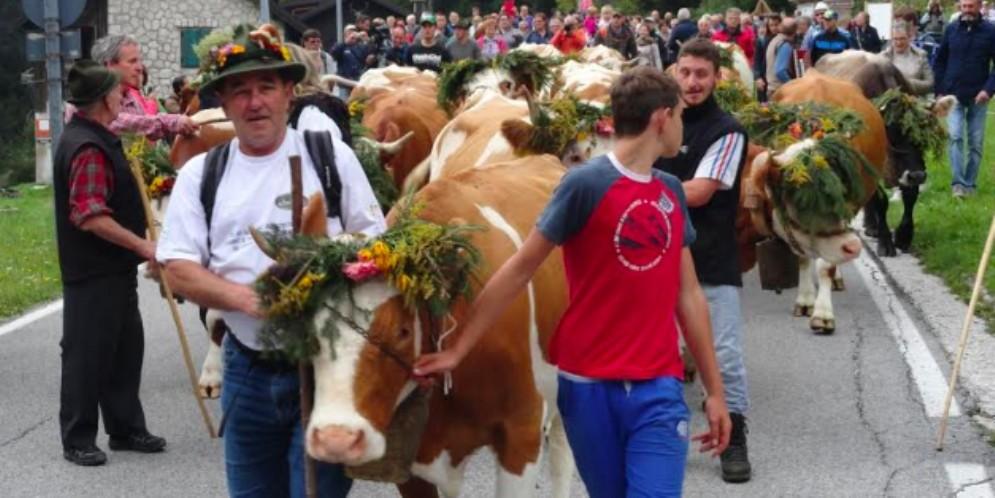 Torna la Festa della Transumanza in malga Montasio