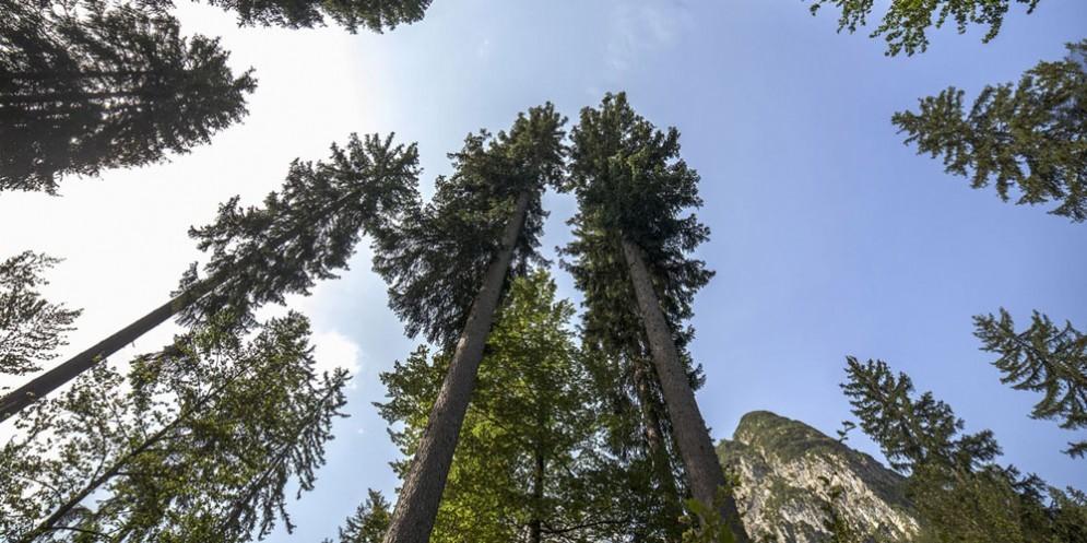 Piantare un albero per ogni abitante. La proposta del Patto per l'Autonomia