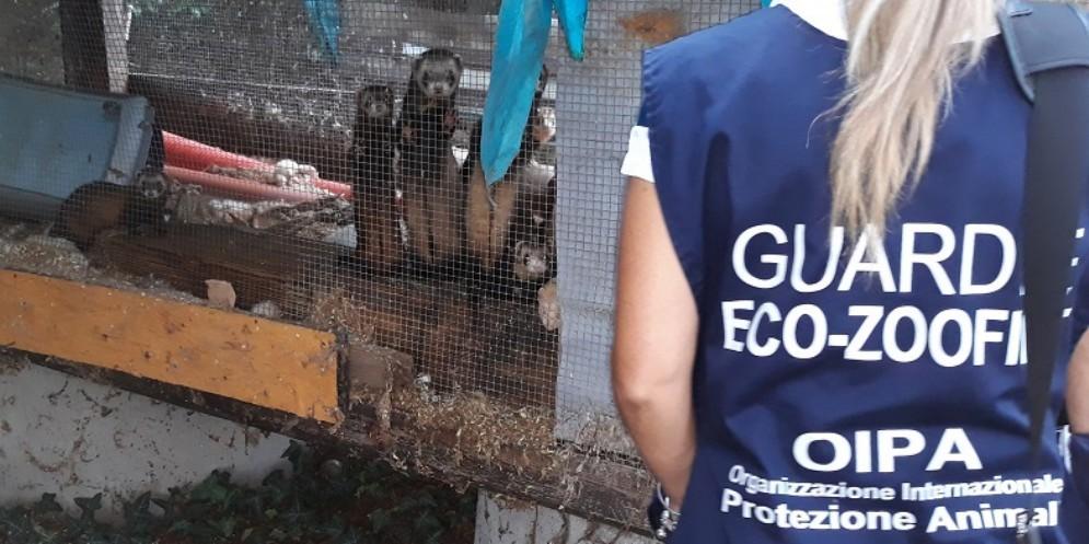 Tredici furetti e otto tartarughe tra rifiuti e sporcizia: la scoperta dell'Oipa