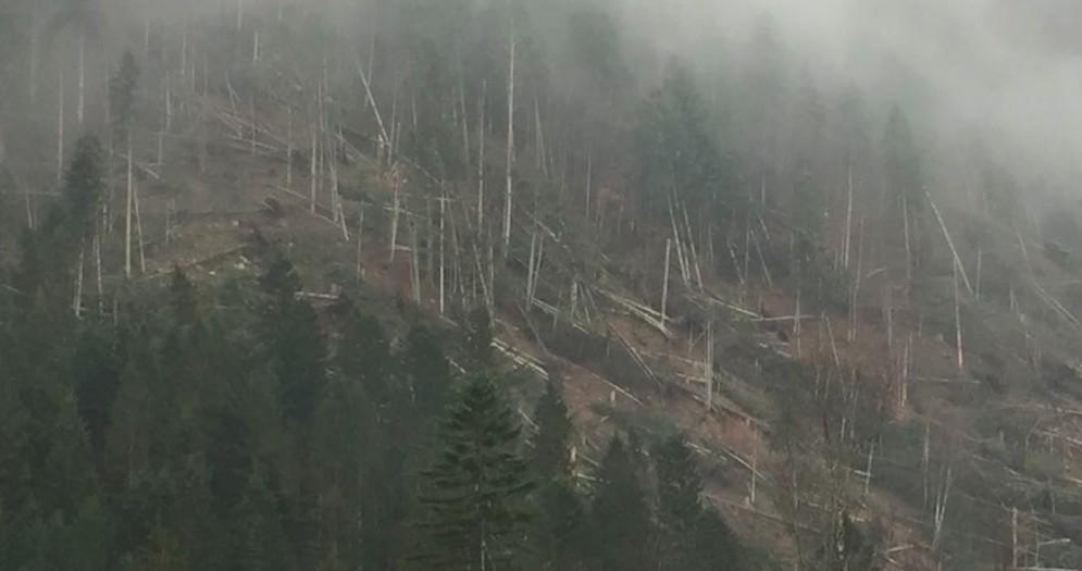 Tempesta Vaia: altri 75 cantieri con i 16 milioni dei ribassi d'asta