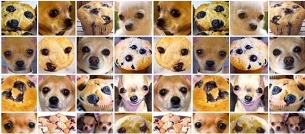 Muffin e chihuahua