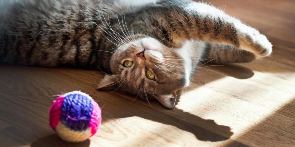 Gatto con pallina
