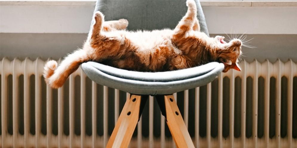 Gatto su una sedia con dietro termosifone